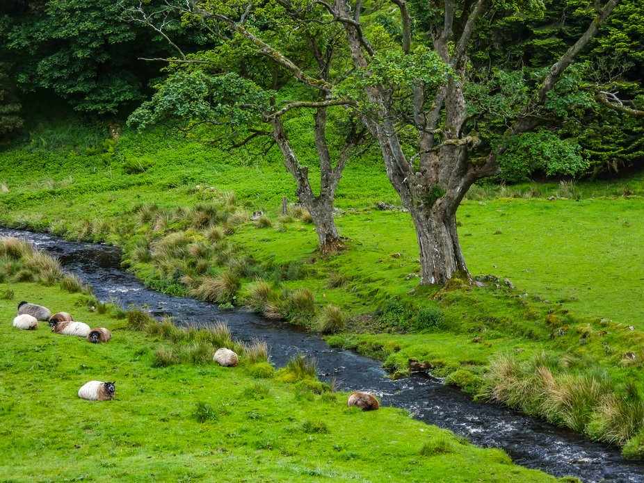 Pasture with stream and sheep