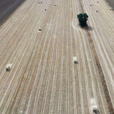 En los campos cerealistas del centro de España, despues de segar con maquina la paja se almacena en estas pacas de paja redondas. Vista aerea con un drone.