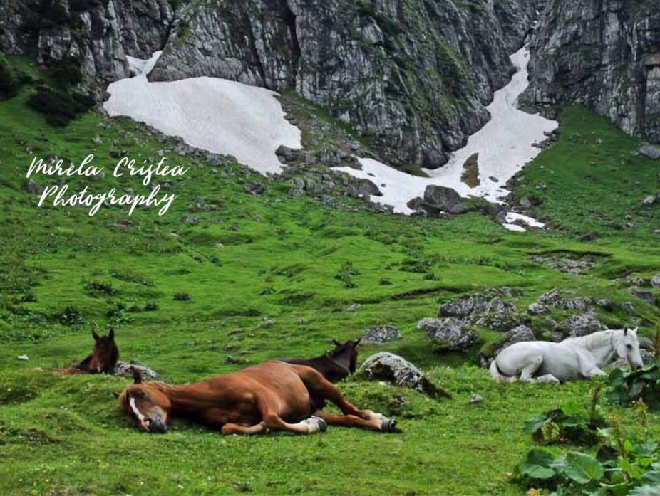 Horses in the mountains, Romania