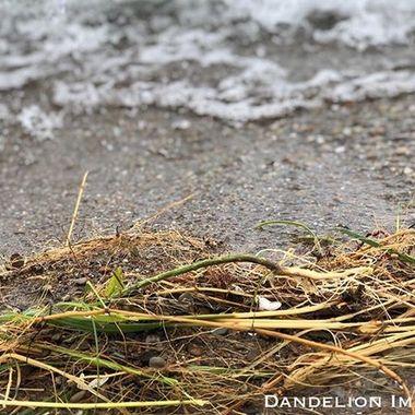 Please follow me and enjoy the images! ???????? #dandelionimages #uptownartsdistrict  #optoutside #michigancityindiana #createplayrepeat #mymichigancity #lakemichigan # #digthedunes #greatlakes #naturephotography #michigancitylighthosouthshoreuse #summert