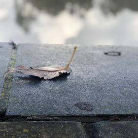 This photo was taken one winter morning. I noticed the leaf sitting on the edge of the lakes boardwalk and couldn't help myself.