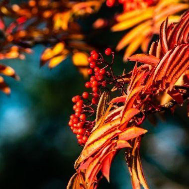 berries-1634