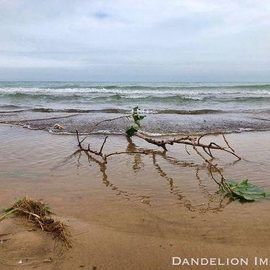 Please follow me and enjoy the images! 📷💋 #dandelionimages #uptownartsdistrict  #optoutside #michigancityindiana #createplayrepeat #mymichigancity #lakemichigan # #digthedunes #greatlakes #naturephotography #michigancitylighthosouthshoreuse #summertime #beachlife #discovermichigancity#sunset #supportlocal #nationalparkservice #mountbaldy #dunies #dunebillies #indianadunesnationallakeshore #southshoreline #indianadunes #dunies