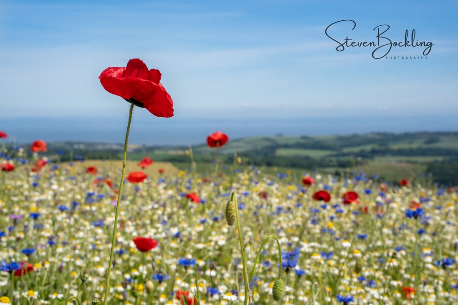 One of my favourite places to shoot, Ken's field in Somerset, thank you for keeping the ...