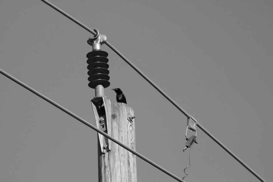 eyes on the wire!