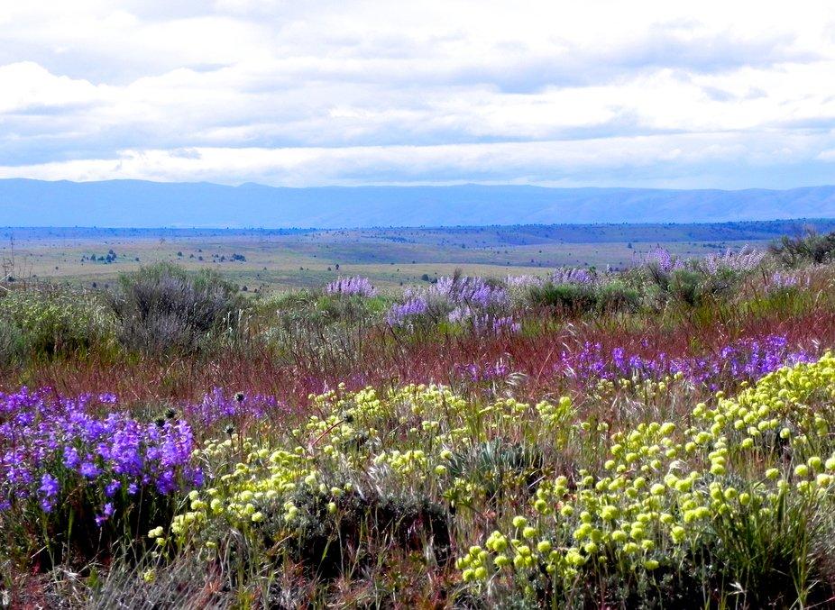 Oregon High Desert Flowers