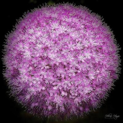 Flower Power Planet