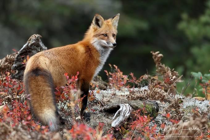 Mammals Photo Contest Winners