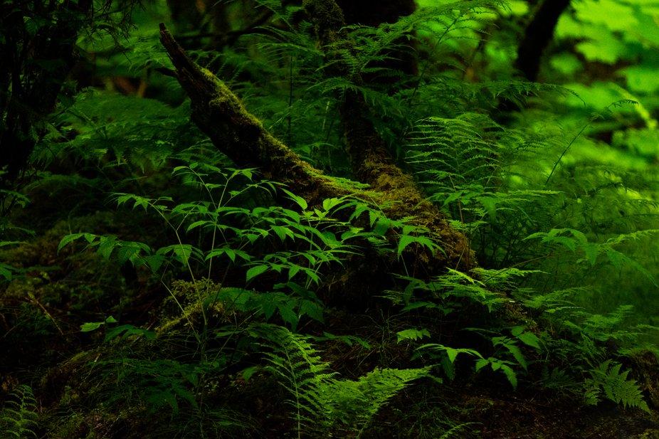 Just a really nice scene in the Alaskan rain forest in Juneau Alaska.