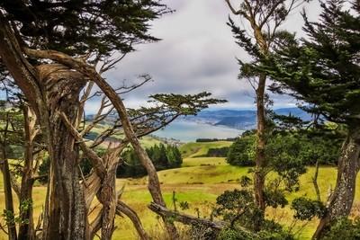 Looking over Dunedin