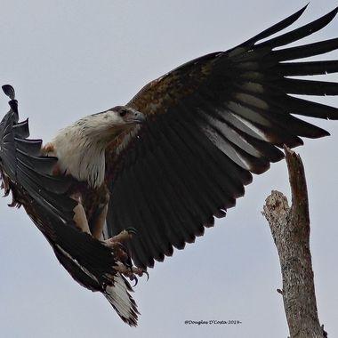 Birds landing