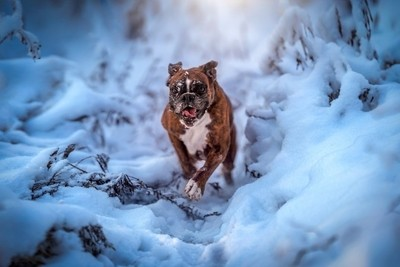Winter action
