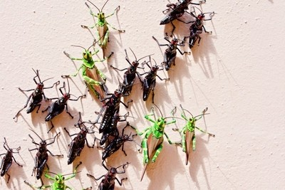 Locust March.jpeg