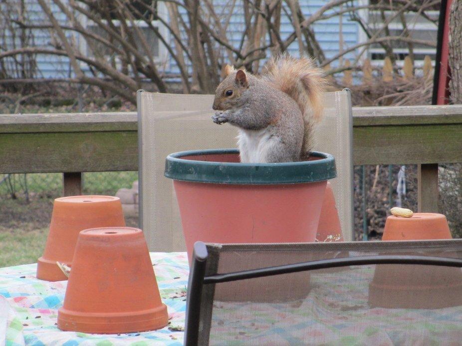 our porch friends
