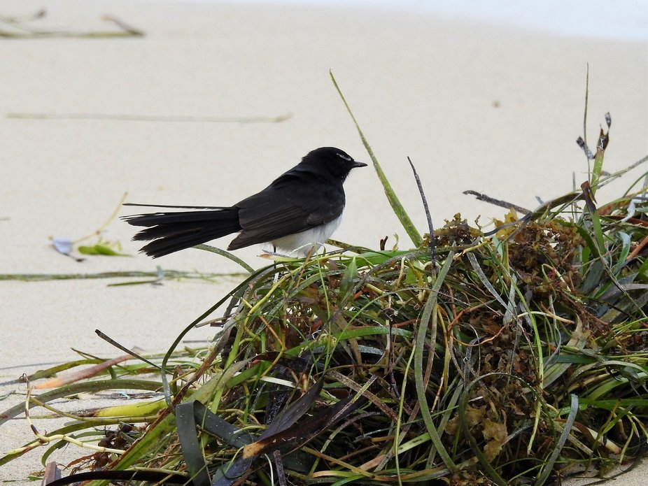 A very lithe little bird flitting around on the beach on a very cold winter's day