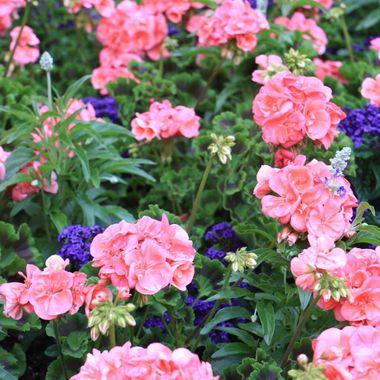 BG FLOWER BED 403