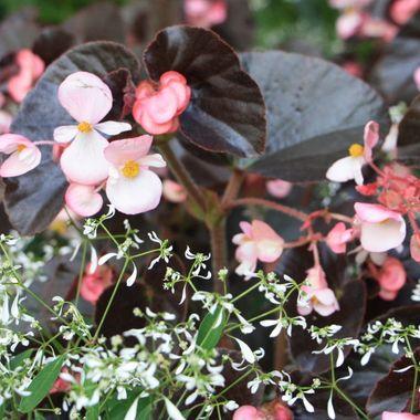 BG FLOWER BED 406
