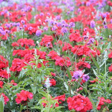 BG FLOWER BED 455