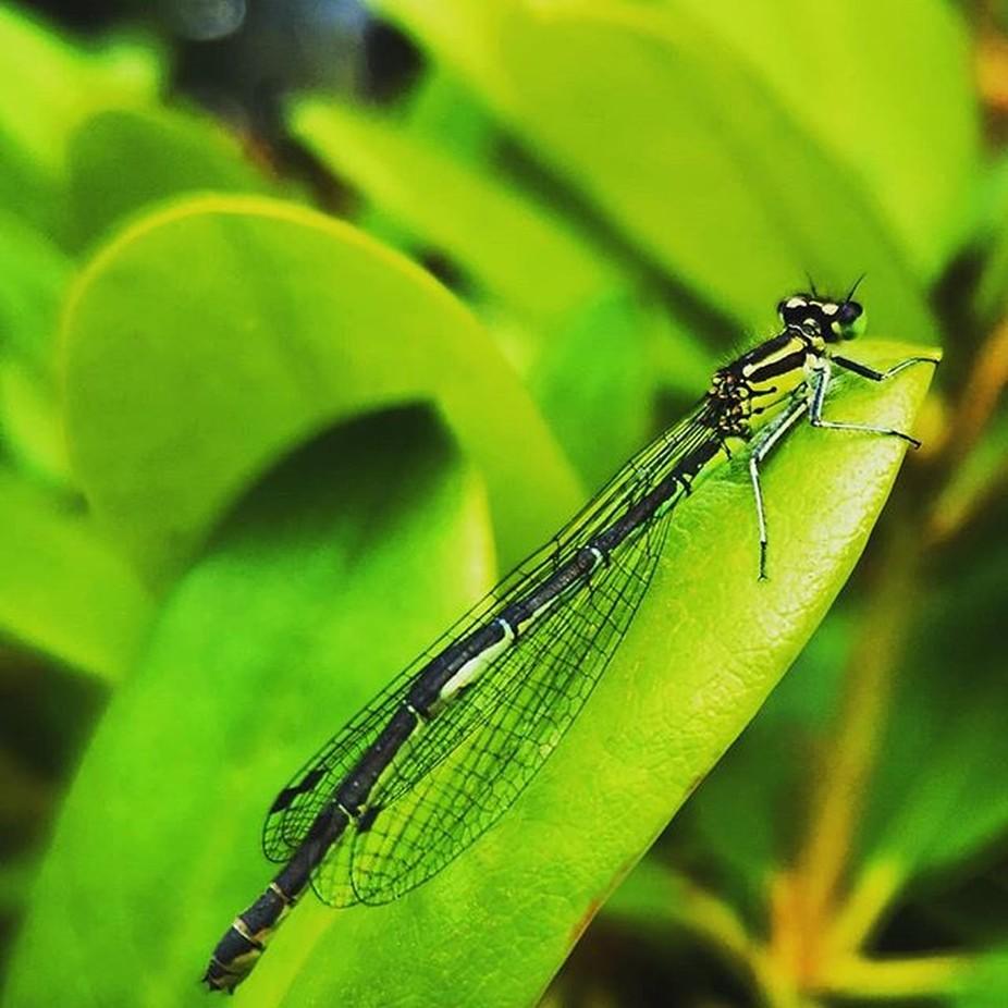 Die erste Libelle erwischt
