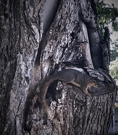 Wildlife daily a tree squirrel habitat