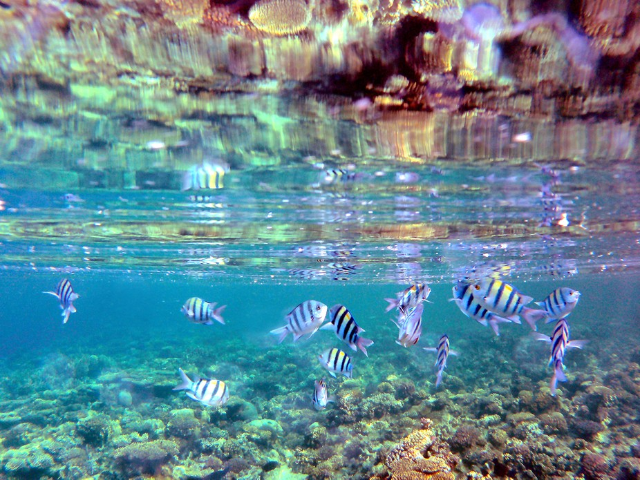 Snorkeling at the housereef at Tui Magic Life Kalawy (Egypt) these little fish come up close to y...