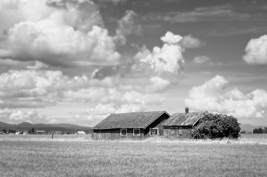 Old barns and farm buildings throughout the farmland of the Skagit Valley of Washington...