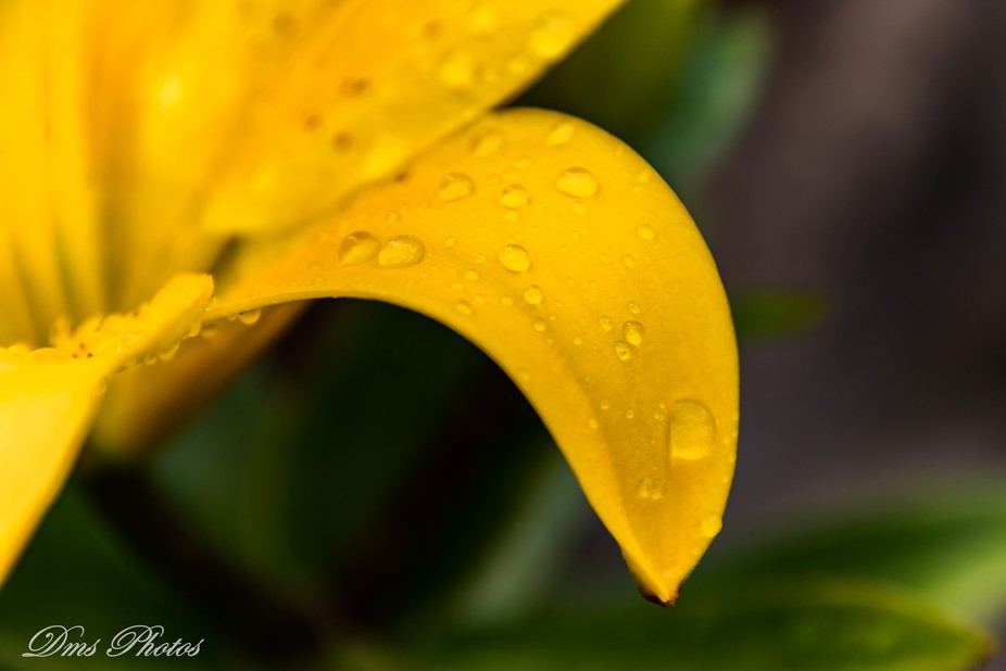 Lilly Rain