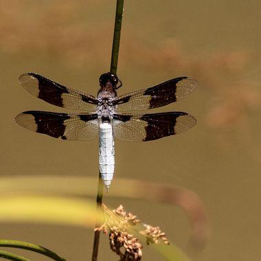 Dragonfly on pond plants