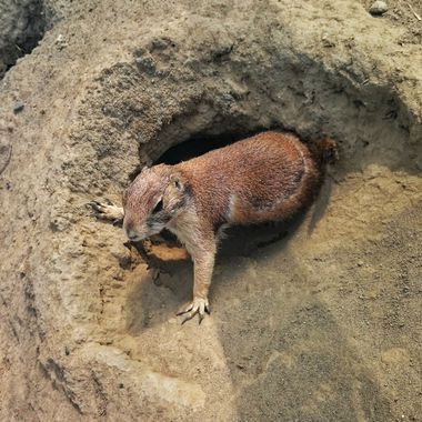 Closeup of animal