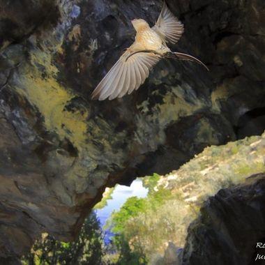Cueva o Gruta sobre el Rio Alagon (Sierra de Francia-Spain). Durante el dia, cria la Golondrina daurica (Cecropis daurica).Habita en los paises templados del sur de Europa.