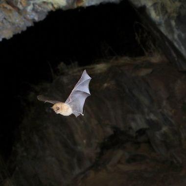 Cueva o Gruta sobre el Rio Alagon (Sierra de Francia-Spain). Por la noche aloja varios tipos de murcielagos.