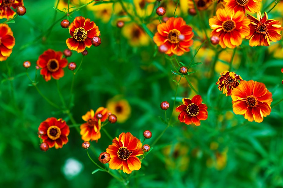 the  flowers in bright colors