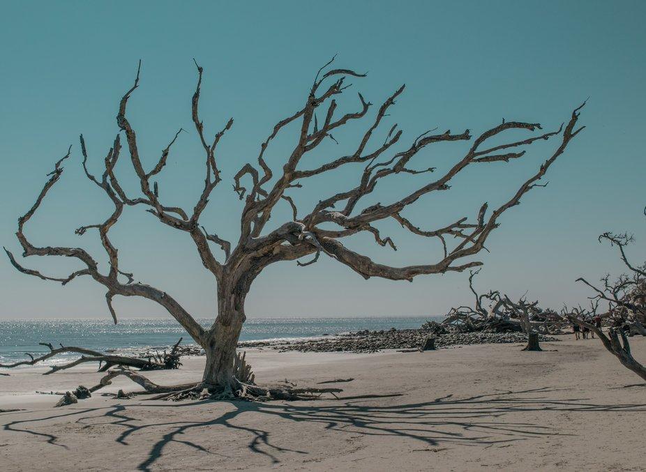 Taken while walking on Driftwood Beach.