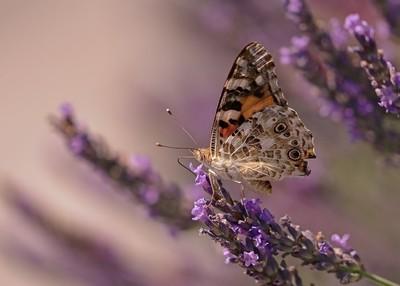 butterfly 2019-03