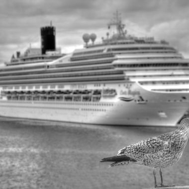 Seagul in Helsinki Port