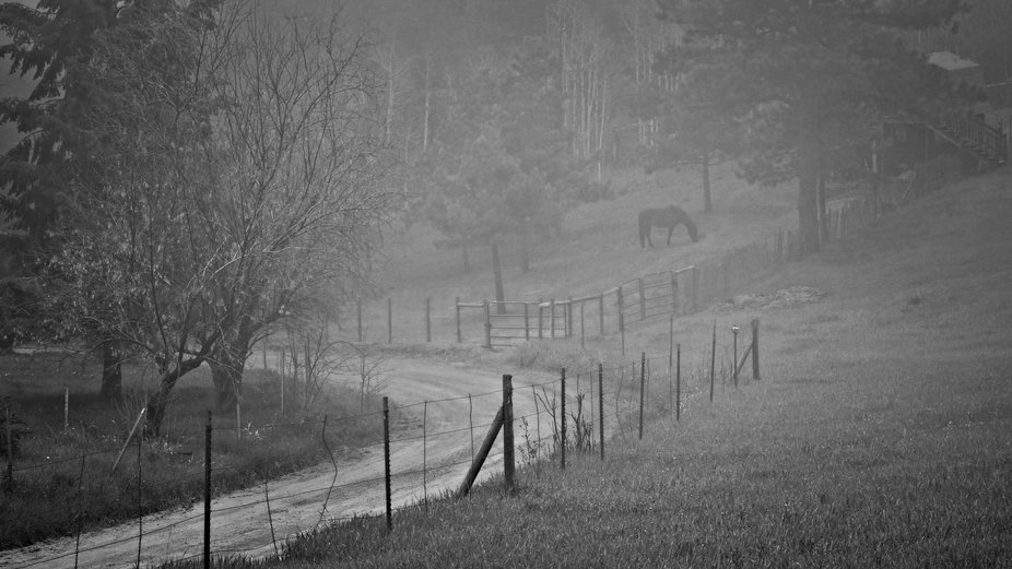Horse Pasture in the Fog