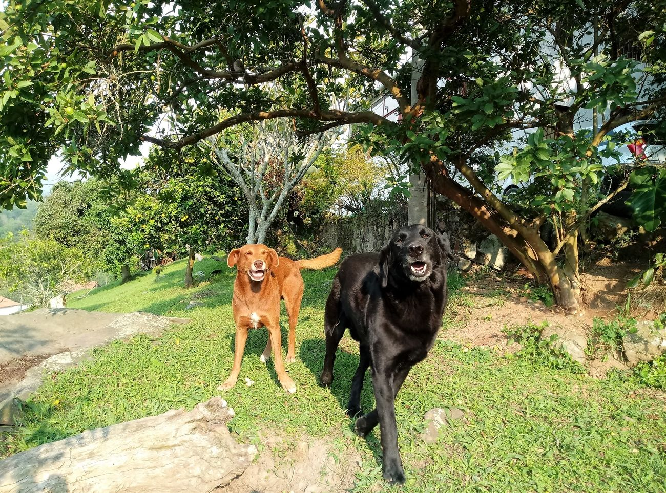 Two dogs friends happy to see the masters