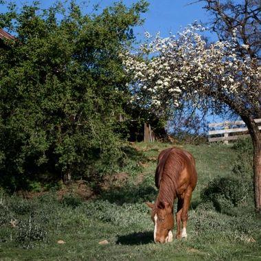 20140322-IMG_0666-Calaveras Spring