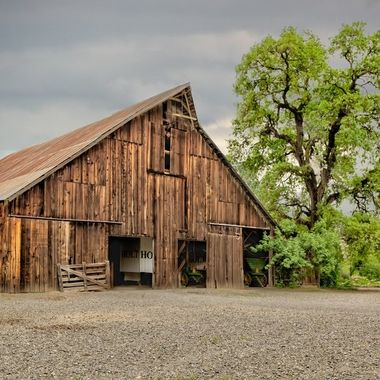 _S6A0818_19_20_21_22_23_24 remasking trees of cache creek barn