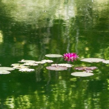 IMG_0473 Lily Pond, Filoli
