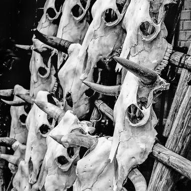20130918-IMG_1037-bull head skulls_BW_OS Fiber_85x11