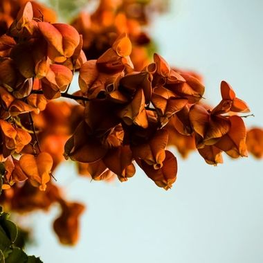 Rusted Blooms NW
