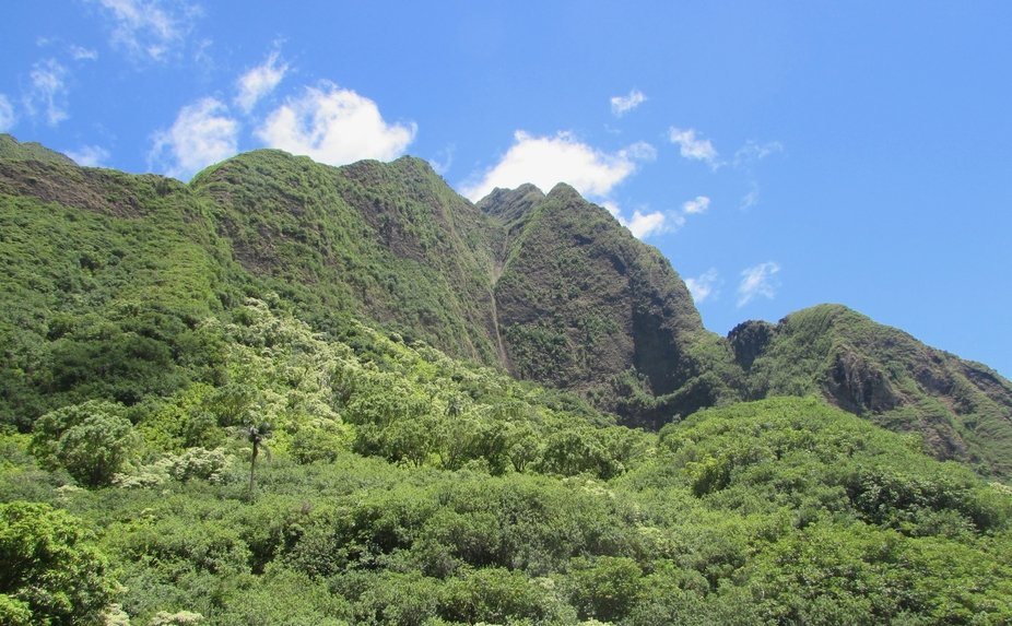 This is a picture taken in 'Iao Valley on the island of Maui.