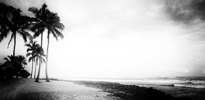 Haleiwa Beach Park, North Shore, Oahu, Hawaii w- @steadsok     Jan '19