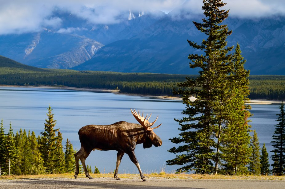 Peter Lougheed Provincial Park,  Alberta    What a great morning.  I just got out of my vehicle r...