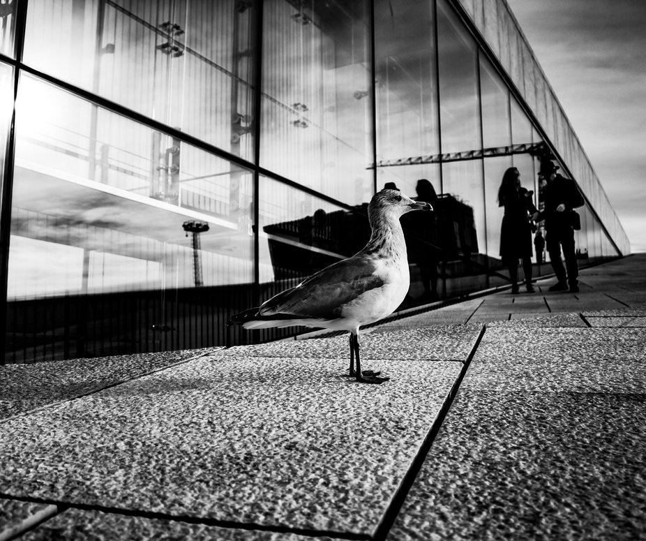 bird of the seaside city