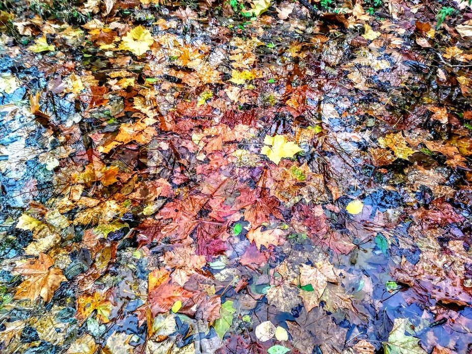 Depth & Reflection fall leaves in a puddle.