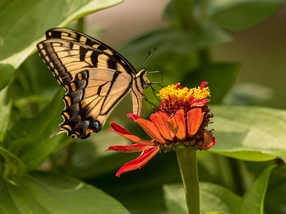 The dust of multicolored cellophane wings   Mingle with pollen made golden twice.  Sable lines of...