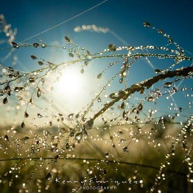 Sunrise Droplets