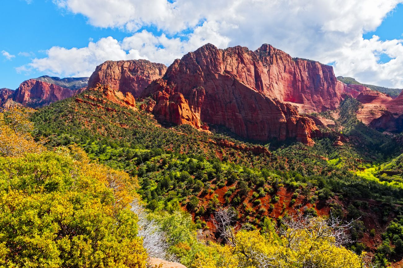 View point from top of Kolob Canyon in Zion National Park, Utah. Trees and reddish hills red steep red rock mountains under a blue sky with white clouds.